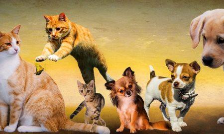 Szia Komárom - Munkalehetőség állatbarátoknak