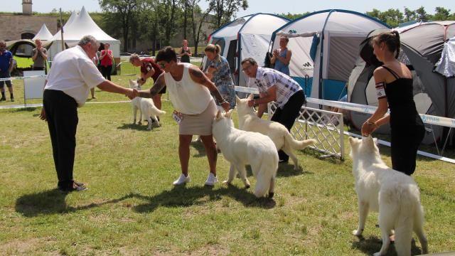Szia Komárom - Közel 5 000 négylábú versenyzett a dél-komáromi kutyakiállításon