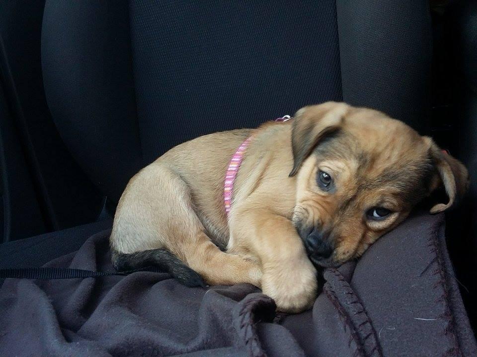 Ilyen szomorú szemekkel nézett szegény kutyus egy évvel ezelőtt