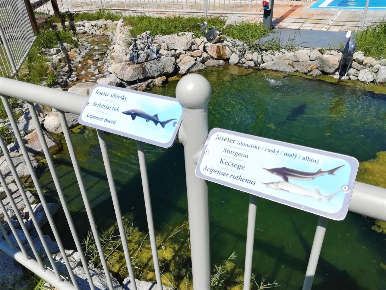 hal medencék ingyenes online társkereső uk